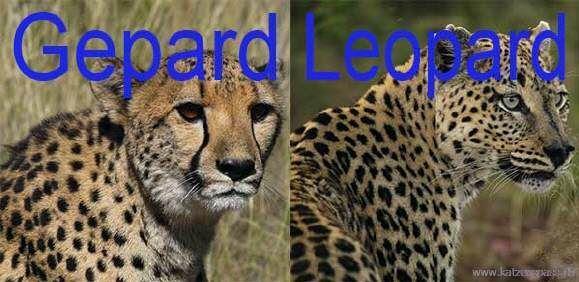 lion king food chain